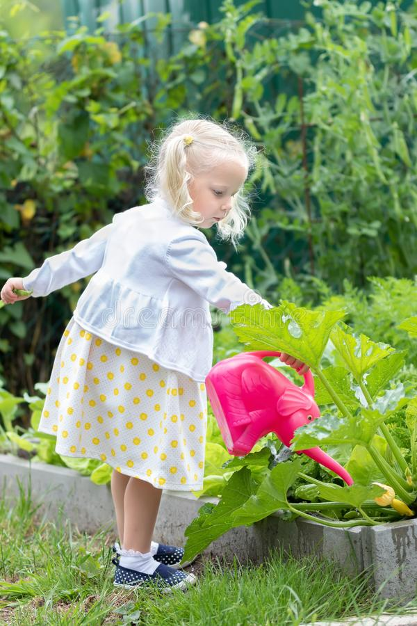 Little girl watering a crop stock photos