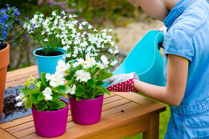 A little girl watering freshly planted flowers in pots stock photography