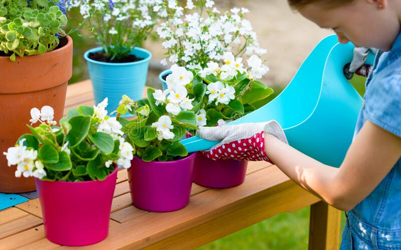 A little girl watering freshly planted flowers in pots royalty free stock images