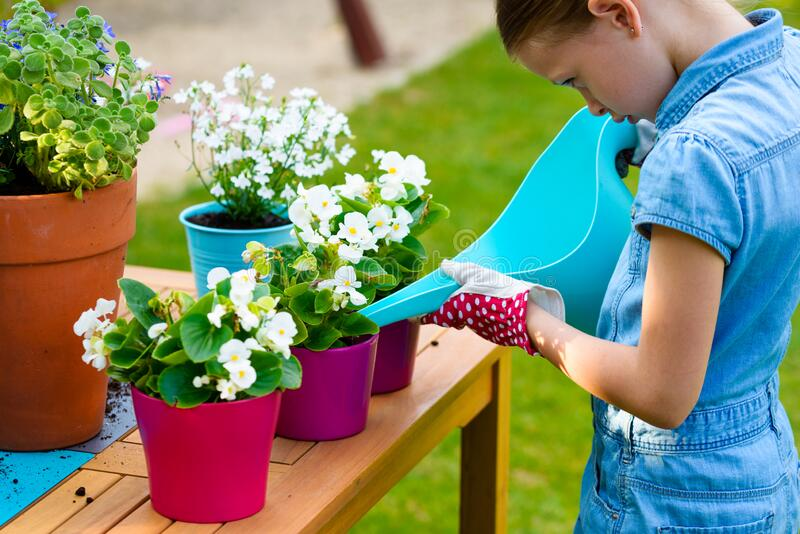 A little girl watering freshly planted flowers in pots stock images