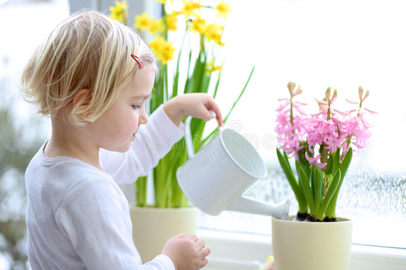 Little girl watering spring flowers at home royalty free stock photography