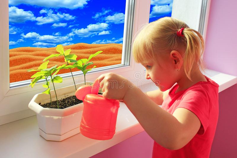 Little girl watering young plants in pot. Sandy desert behind window of room where little girl living royalty free stock photos