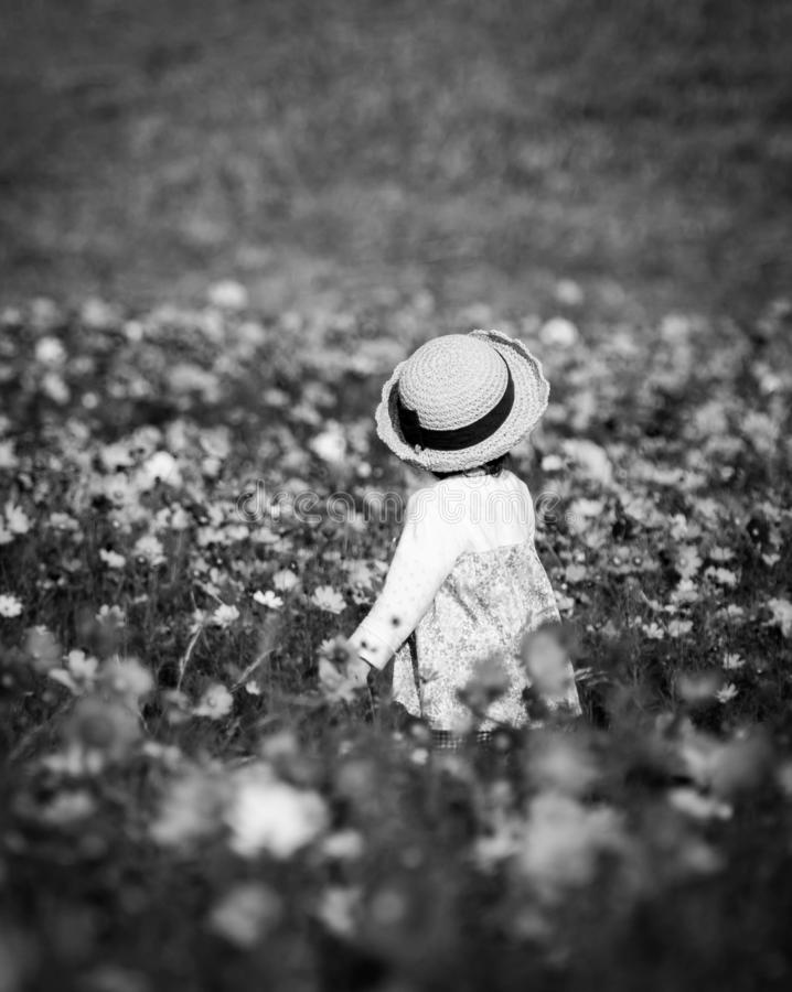 Little girl wearing a hat walking at the center of cosmos field garden. Black and white monochrome image. royalty free stock photo
