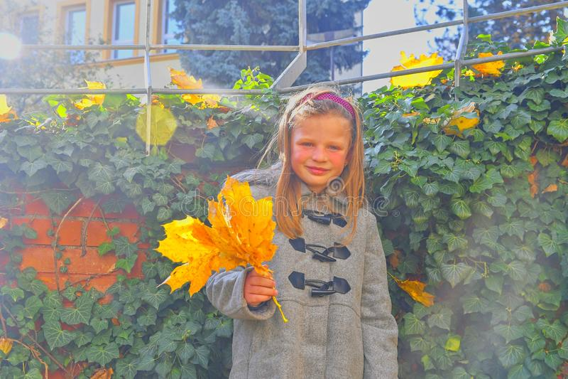 Little girl wearing retro coat and standing in front of brick wall in autumn. Ivy wall in autumn. Autumn concept. Lens flare royalty free stock image