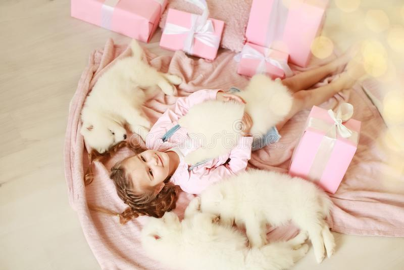 Little girl with white puppies and gift boxes stock photo