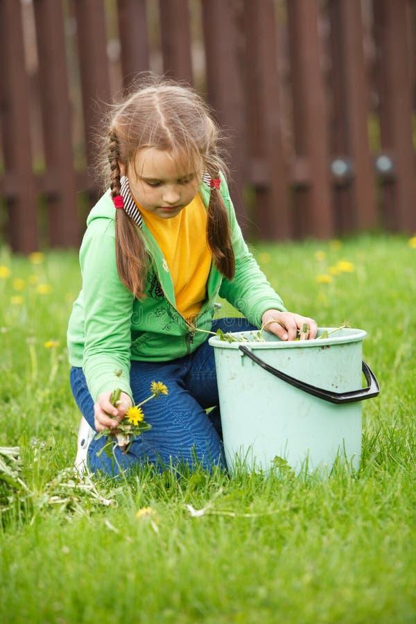Little girl working in garden royalty free stock image