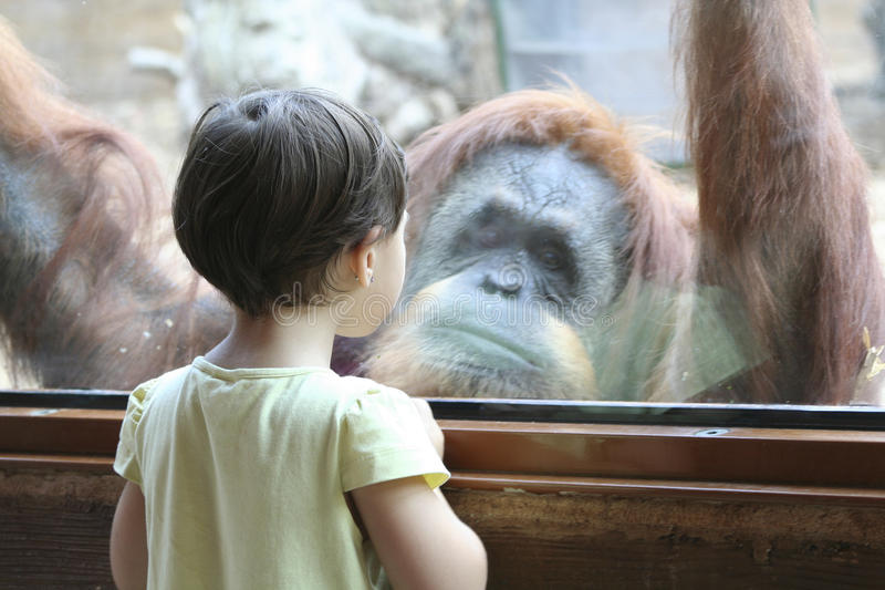 Little girl at the zoo royalty free stock photos