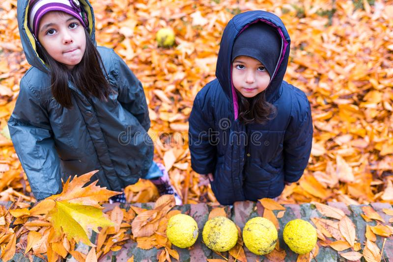 Little girls in autumn orange leaves at park stock photography