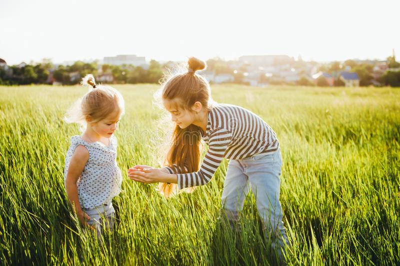 Little girls are looking at insects in the green grass on the field. royalty free stock images