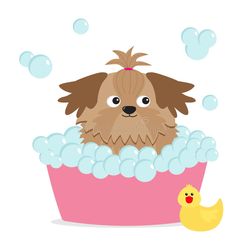Little glamour tan Shih Tzu dog taking a bubble bath. Yellow duck bird toy. Cute cartoon baby character. Flat design. White backgr vector illustration