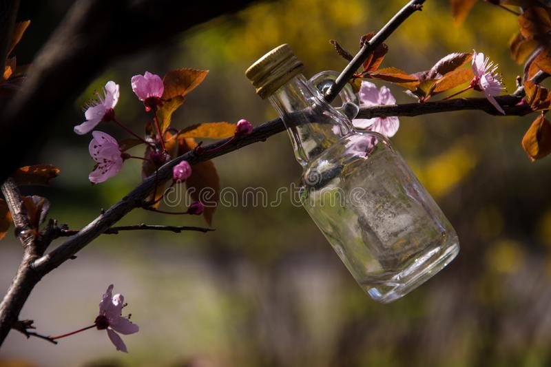 Little glass bottle hanging on the tree beween pink flowers stock photography