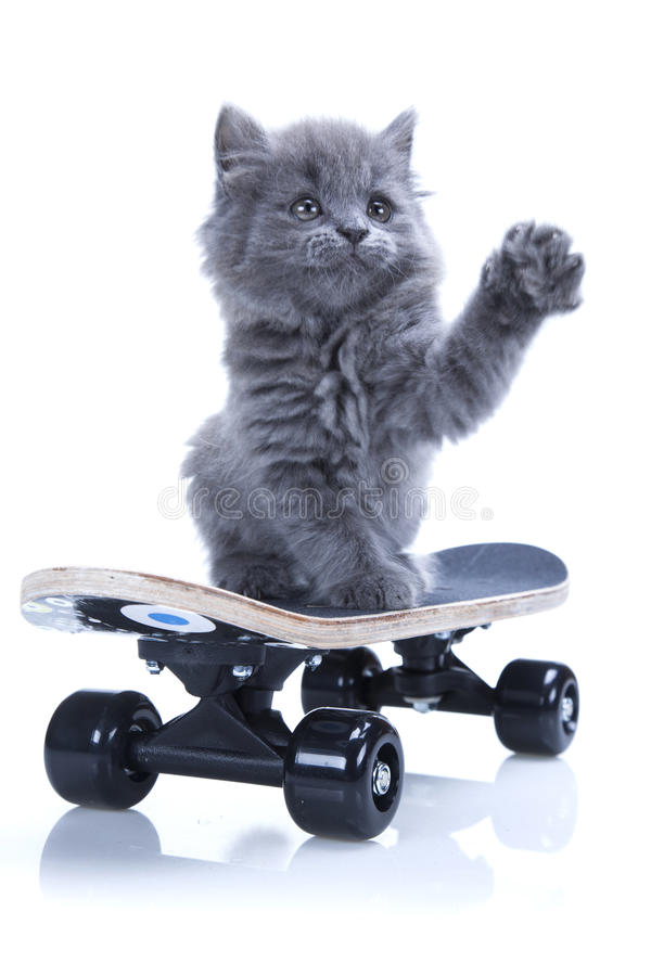 Little gray kitten says hello royalty free stock photography