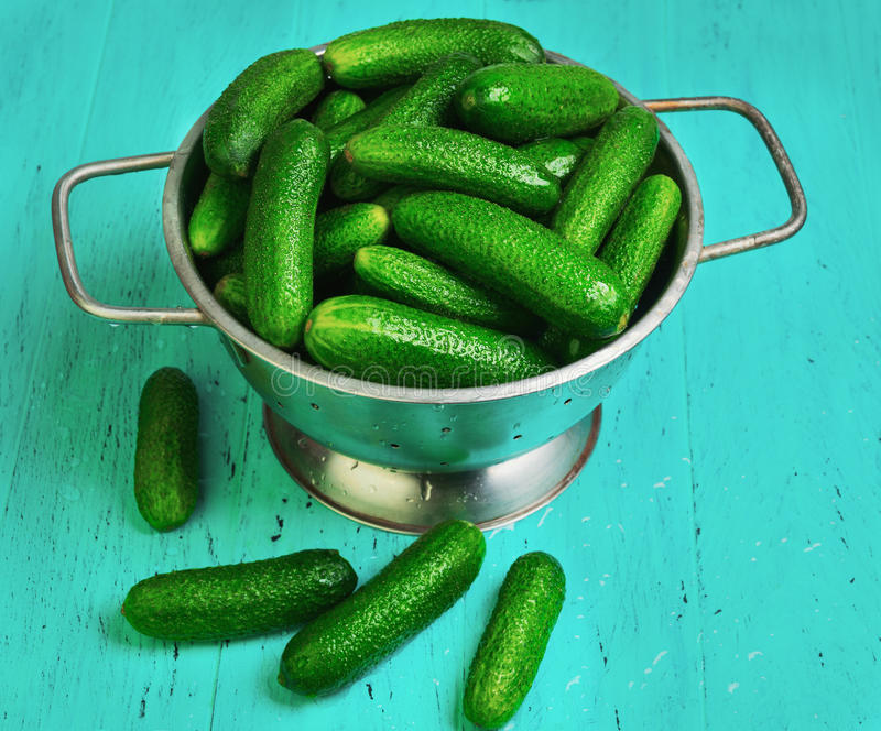 Little green cucumbers royalty free stock images