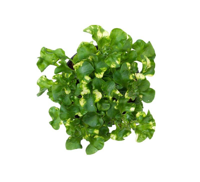 Little green organic tree stock photo