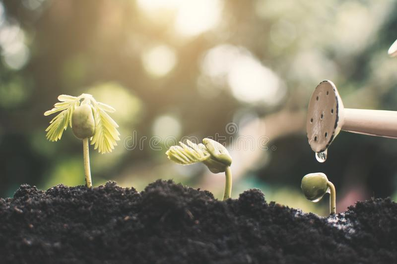 Little green plant growing up. On soil stock image