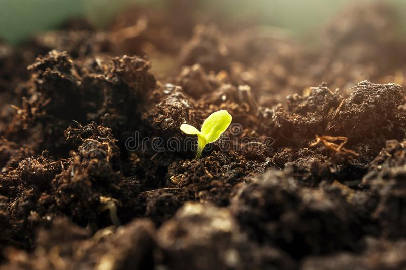Little Green Sprout Growing From the Ground in the Spring Morning Sunlight. New Life, Organic Agriculture, Business Growth Concept stock photos