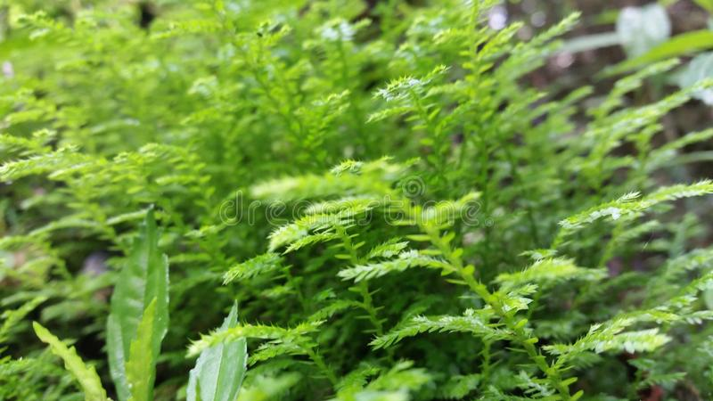 Little green trees stock photography