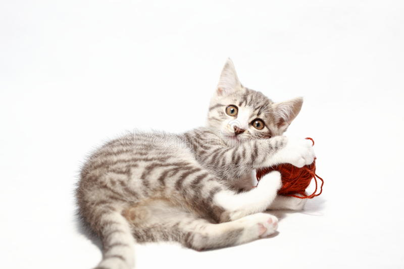 Little grey cat. Is playing with brown wool royalty free stock photos