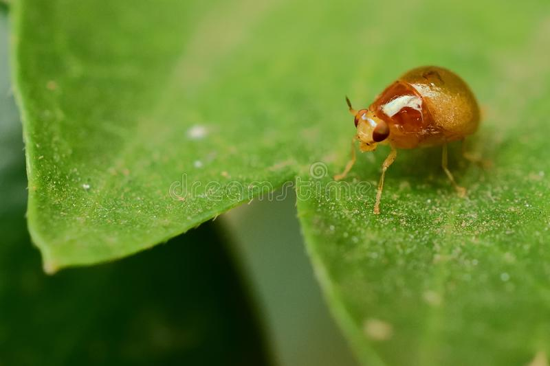 Summer Bug Business royalty free stock images