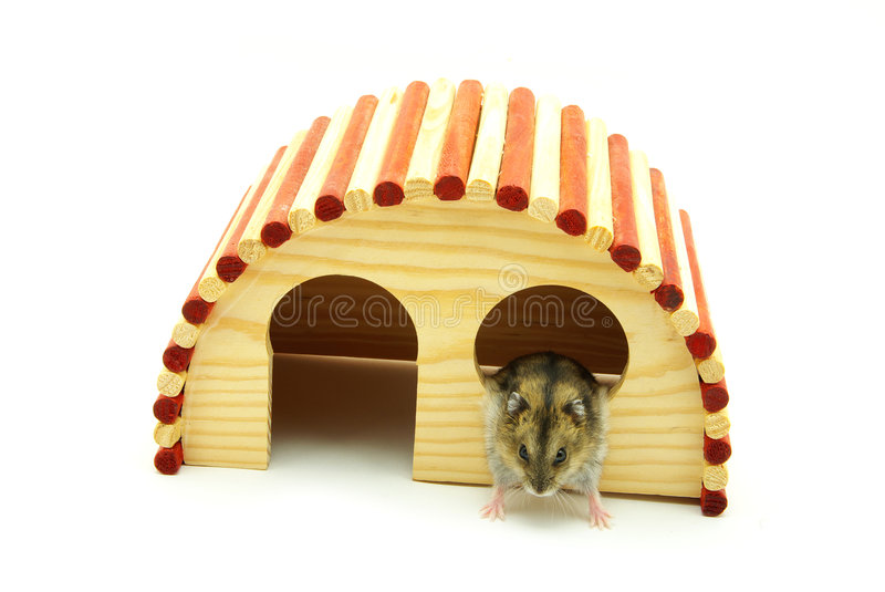 Little hamster stock images
