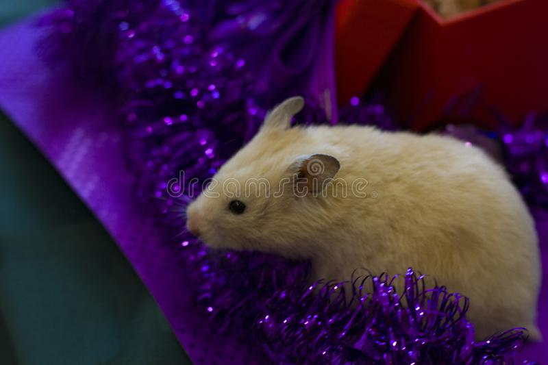 Little hamster sits on a green background of Christmas decorations and lights. Background for design.Happy New Year 2020 stock image