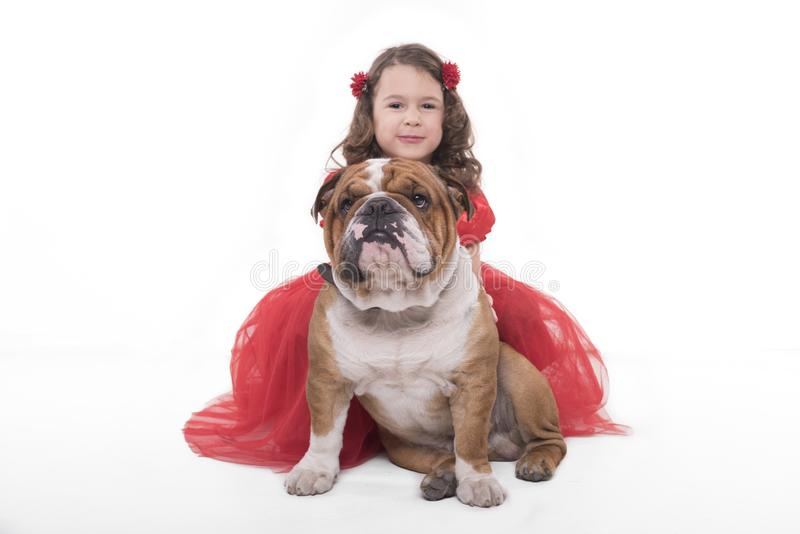 Little girl with her English bulldog stock images