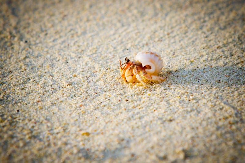 Little hermit crab stock photos