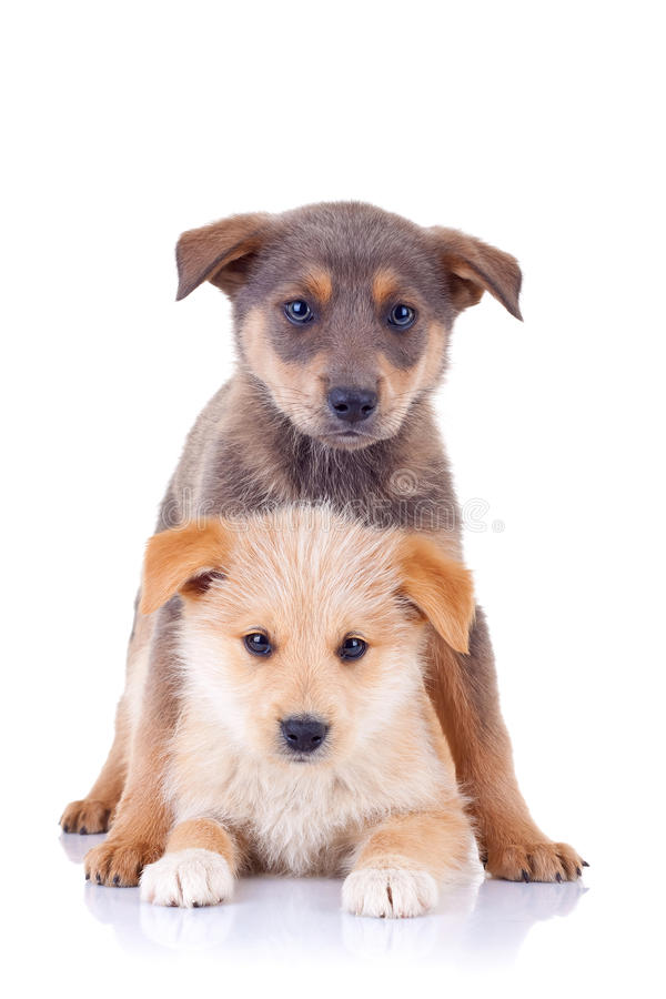 Little homeless puppy. Playing together and looking at the camera royalty free stock photography