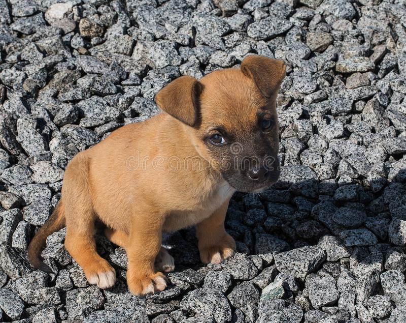 Little homeless red puppy with sad eyes on a pile of stones stock photography