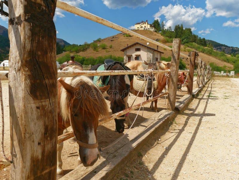 Little horses pony fence royalty free stock photos
