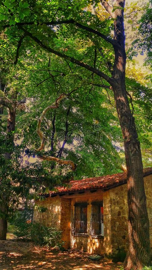 little house at the forest! royalty free stock image