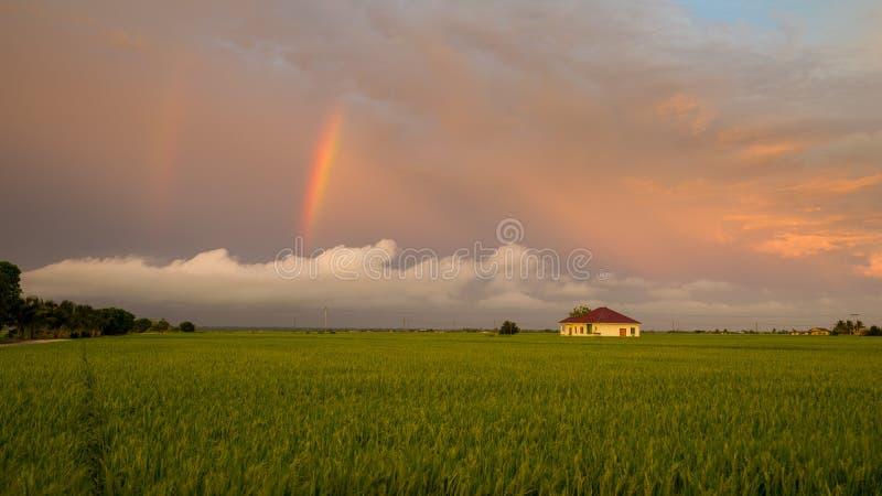 Little house in paddy fields. At Sabak Bernam, Malaysia stock image