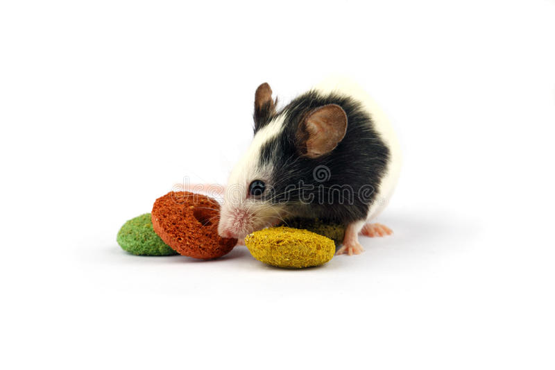 Download Mouse And Rodent Food Isolate On White Stock Photo - Image: 30098038