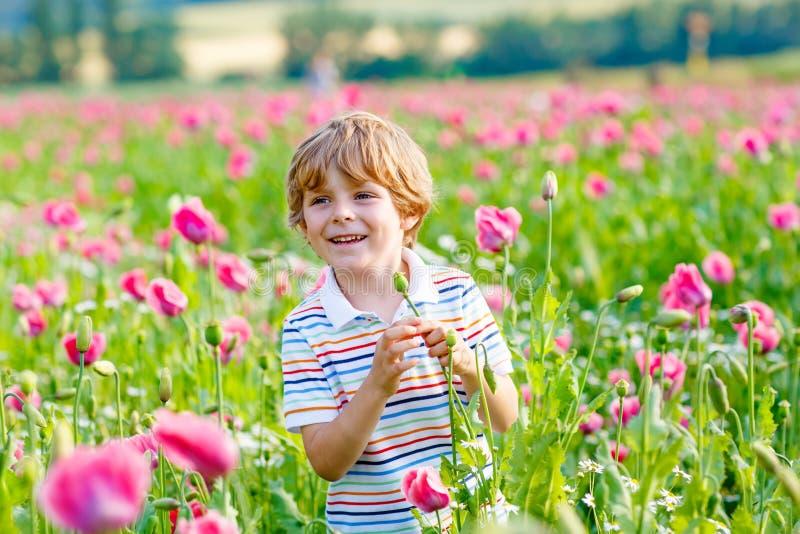 Little kid boy in blooming pink poppy field royalty free stock photo