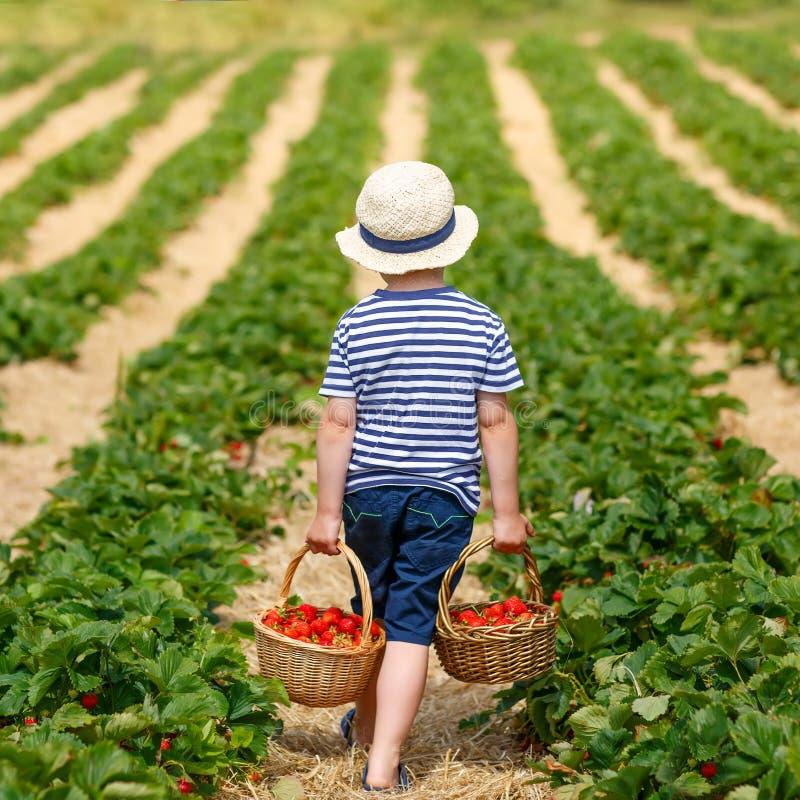 Little kid boy picking strawberries on farm, outdoors. Funny little kid picking and eating strawberries on organic bio berry farm in summer, on warm sunny day stock photos