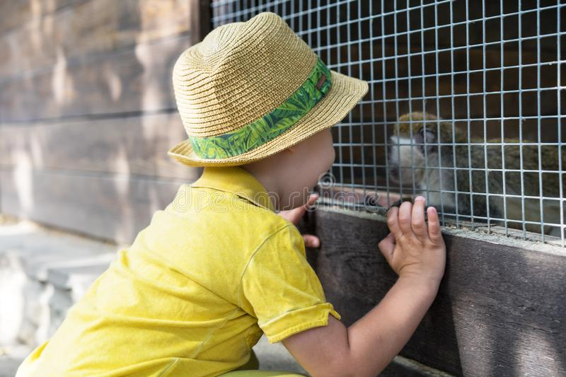 Little kid boy watching animal cage zoo. Happy child having fun with animals safari park on warm summer day.  royalty free stock image