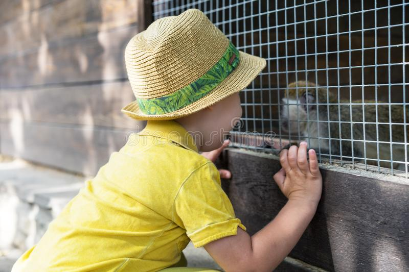 Little kid boy watching animal cage zoo. Happy child having fun with animals safari park on warm summer day.  stock photography