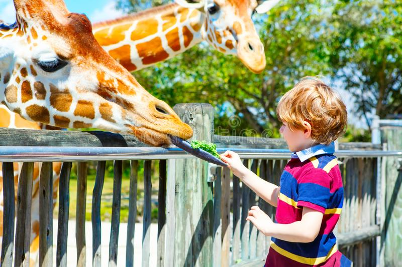 Little kid boy watching and feeding giraffe in zoo. Happy child having fun with animals safari park on warm summer day stock photography