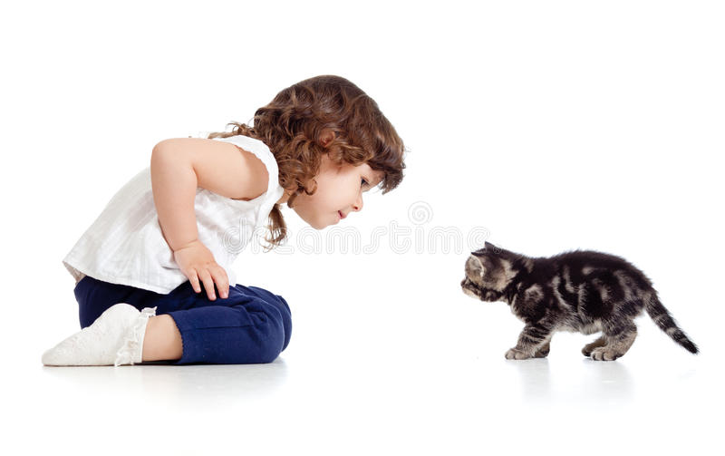Little kid and cat looking at each other on white royalty free stock image