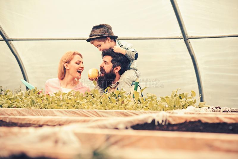 Little kid in fedora hat feeding his parents with apple while sitting on daddys shoulders. Bearded man with his wife and stock image