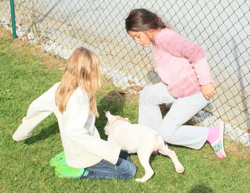 Little kids - girls playing with a puppy stock photo