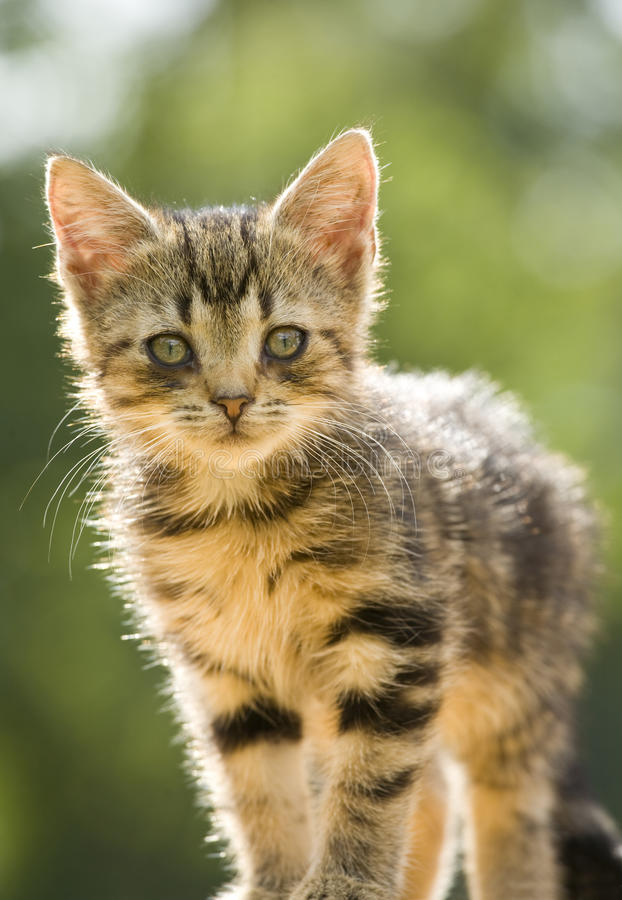 Free Little Kitten Stock Images - 10482254