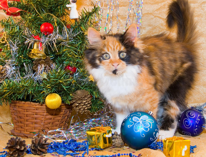 Download Little kitten stock photo. Image of ornaments, tabby - 11940636