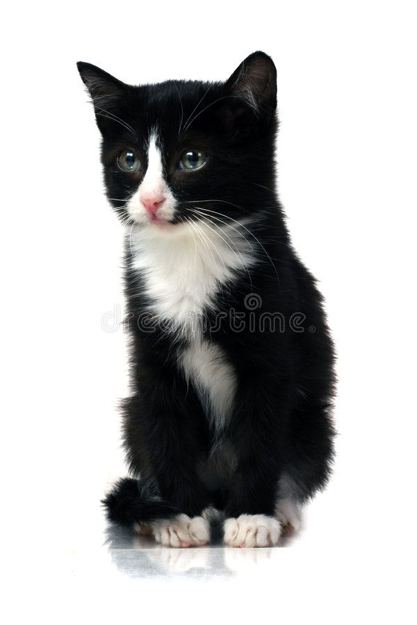 Download Little kitten stock photo. Image of sweet, give, celebrate - 1837182