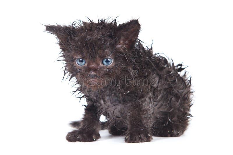 Download Little kitten stock image. Image of black, cute, freak - 20170675