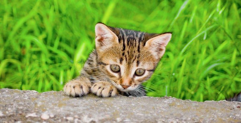 Little kitten. Skulking in green graze royalty free stock photos