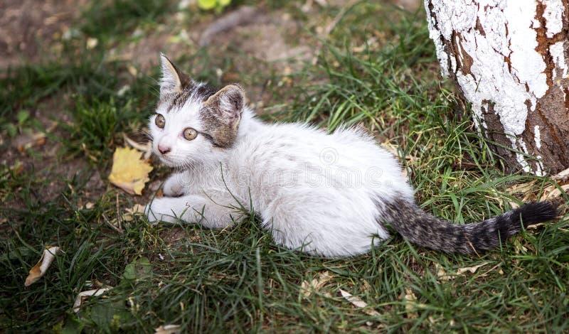 Little Kitten. An astonished little kitten cat is looking around on the grass stock photo