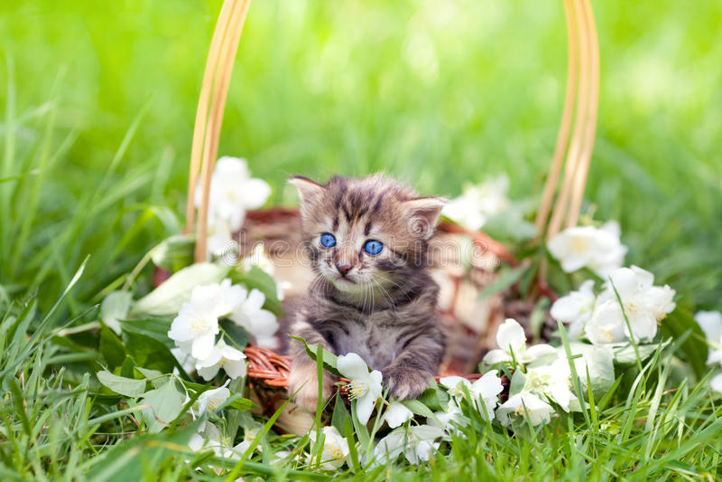 Little kitten in a basket stock images
