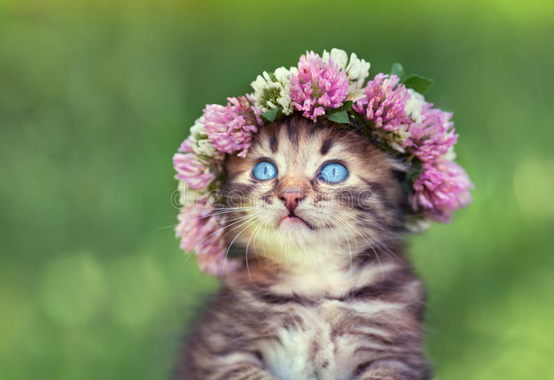 Little kitten with a chaplet of clover stock images