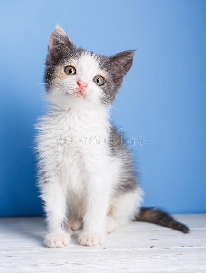 A little kitten with a gray tail sits on a white table. The cat sits on a light blue background royalty free stock photography